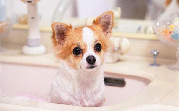宠物店小程序开发给宠物店带来哪些便利