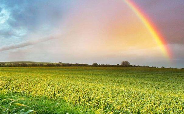 农业认养小程序开发有哪些作用? 第1张